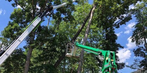 Tree Service , Tree Trimming, Tree Removal