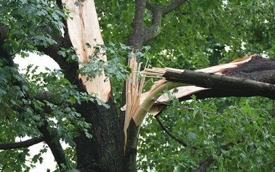 Tree Service Stratton Landscaping Free Estimates